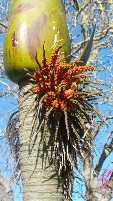 A similar palm tree