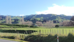 road back to Auckland